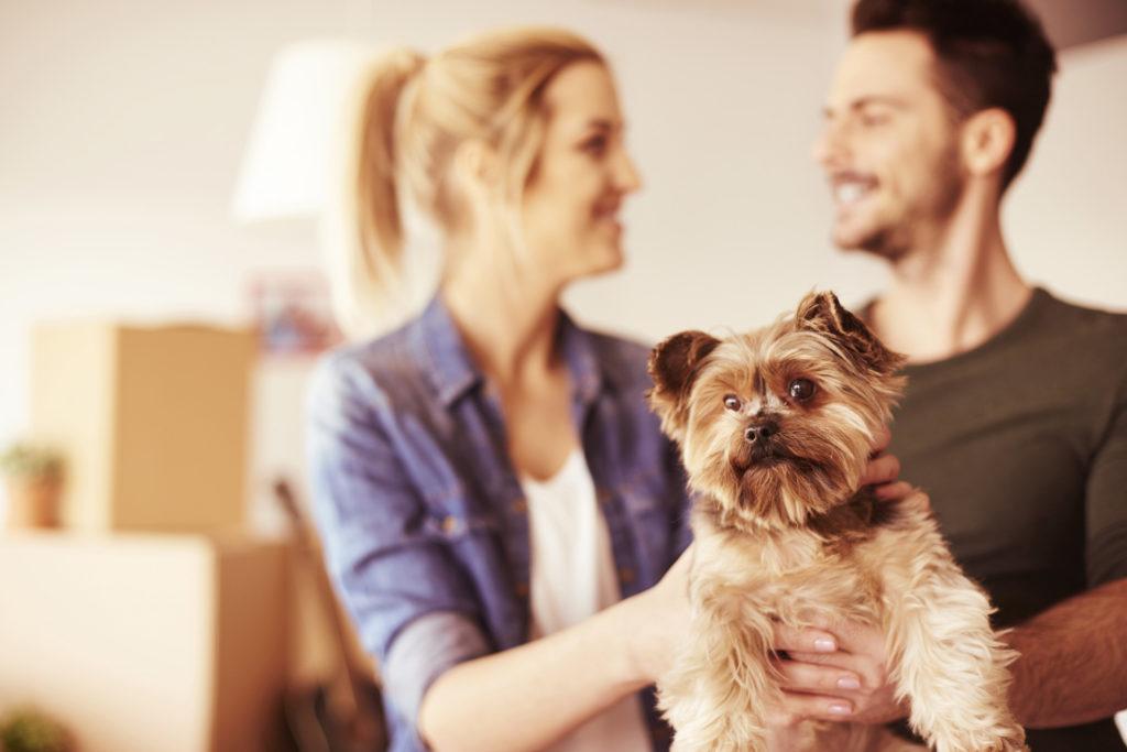Η σωστή προετοιμασία για ένα νέο σκυλάκι στο σπίτι