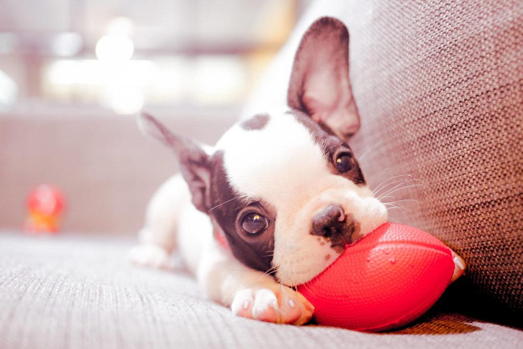Συμβουλές και προτάσεις για να υποδεχτούμε ένα σκυλάκι στο σπίτι μας