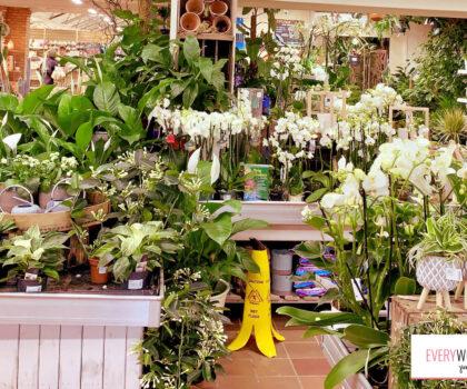 Ποιά φυτά ταιριάζουν στην προσωπικότητα και τον τρόπο ζωής μας