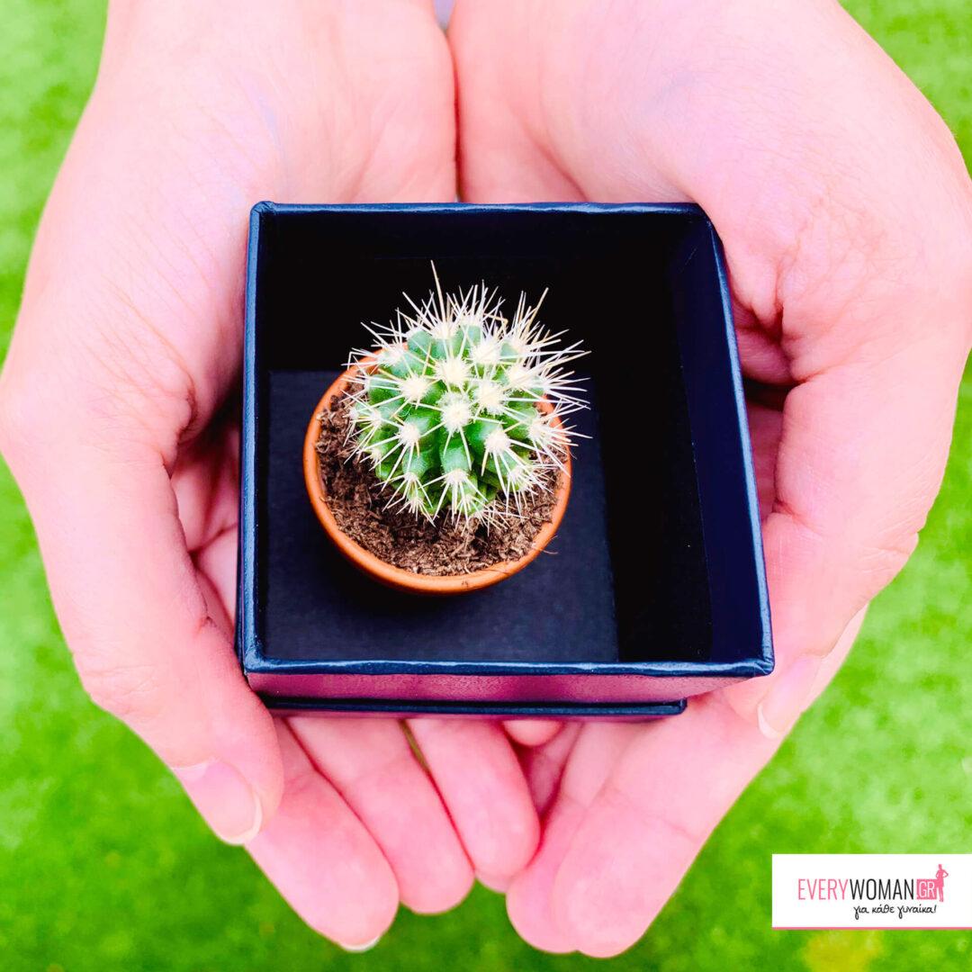 Τι συμβολίζουν τα αγαπημένα μας φυτά