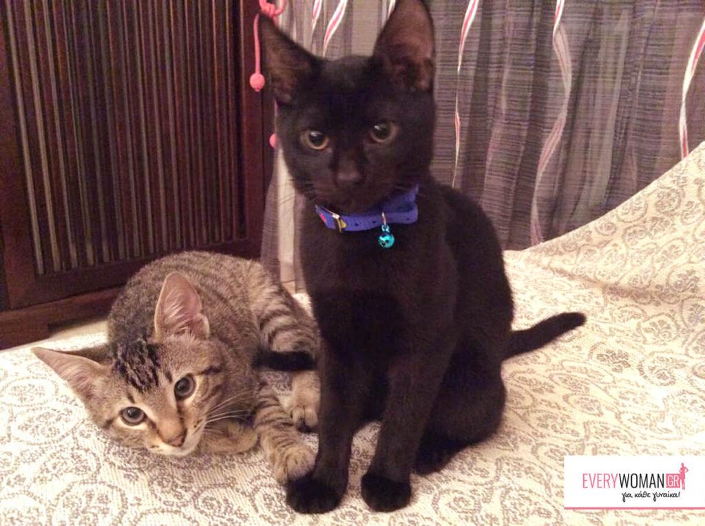 Μια ιστορία αγάπης αλλιώτικη από τις άλλες - γατάκια